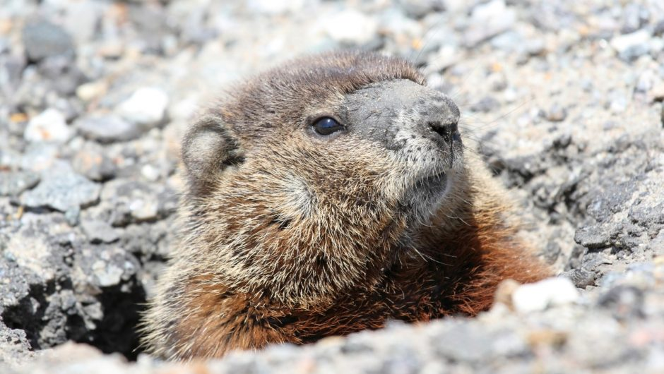 Groundhogs all agree winter almost over