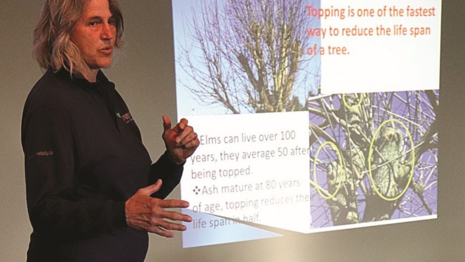 Arbourist says there is no reason most of Peace River's 99 St. trees can't be saved