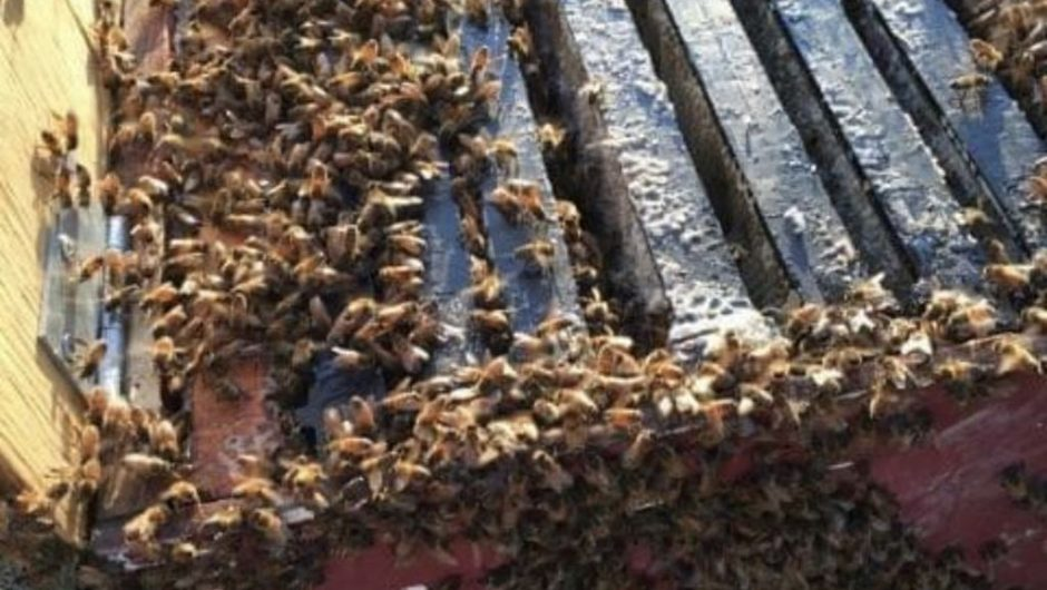 Peace Country beekeepers hit hard by impact of COVID-19